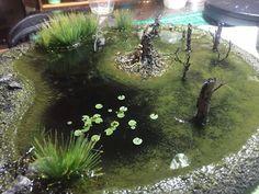 Swamp Pond 2