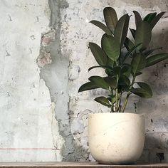 ODD STANDARD Blom XL Plants, Plant, Planets