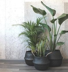 Barro Basket Black is part of Living room plants decor - Barro is a Spanish word meaning 'mud', but it's not just their name that makes these baskets so exotic They've been handwoven out of seagrass Living Room Plants Decor, House Plants Decor, Patio Plants, Plant Decor, Indoor Plants, Plantas Indoor, Decoration Plante, Balcony Decoration, Inside Plants