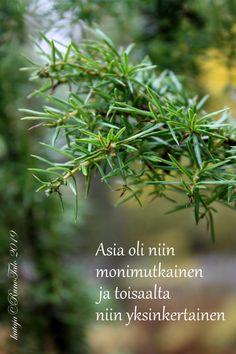 Herbs, Asia, Herb, Medicinal Plants