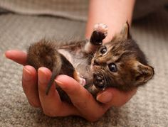 a handful of kitten
