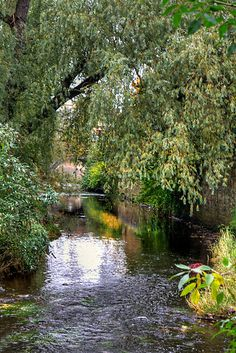Deep in the city, Water of Leith is a river which runs through the centre of Edinburgh, Scotland.