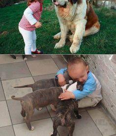 cat litter , cat service , best cat pets , cats broadway tickets ,dog forum , dog training school , home cooked food, diet, healthy diet
