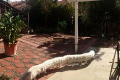 taking a panorama picture when your dog walks by