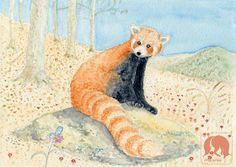 Red panda, Animal and Nature Art Print, Nursery Animal Print, Wildlife Watercolor, Animal Hall Décor, Gifts for Kids, Baby Shower Gifts https://www.etsy.com/listing/521083766/red-panda-animal-and-nature-art-print?ref=shop_home_active_27