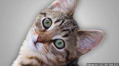 #panama #orbispanama Feeding stray or feral cats in Panama City could soon be prohibited - WJHG-TV #KEVELAIRAMERICA #orbispanama