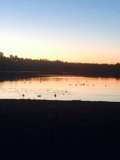 Lake with ducks Ducks, Trees, Celestial, Sunset, Natural, Flowers, Pictures, Outdoor, Photos