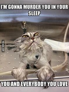 Every time I see a wet cat I cannot stop laughing, they're hilarious.