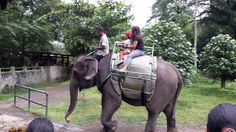 Petition · Siti Nurbaya Bakar: Ban Elephant Rides in Indonesia · Change.org