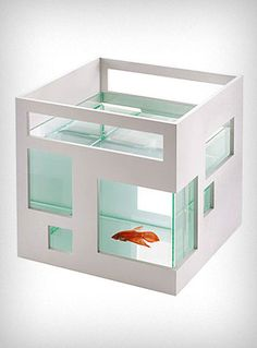 ゝ。Fish Cubicle.