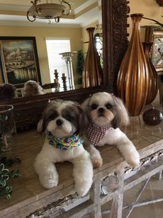 First haircut for Chance and CoCo