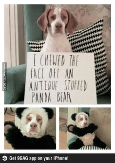 I love dog shamming!