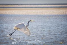 Beautiful bird on Hilton Head Island, SC