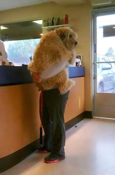cute-dogs-hugging-humans-11