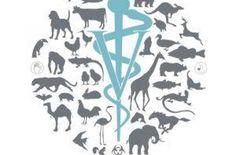 Medicina Veterinária, uma profissão por amor! - Eduarda Andries