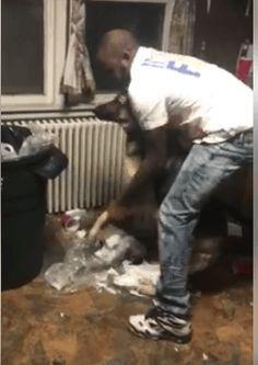 Video of man punishing dogs
