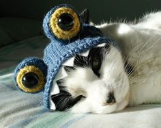 OMG - a giant blue frog is eating the kitty...  supercutekawaii.com