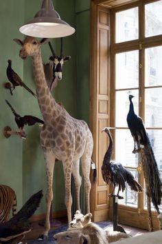 Décoration, design : les animaux naturalisés par Deyrolle