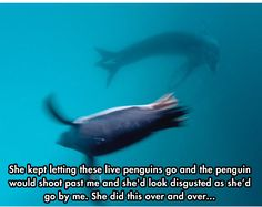 Stop what you're doing and read this article about a seal because IT WILL CHANGE YOUR LIFE. <3