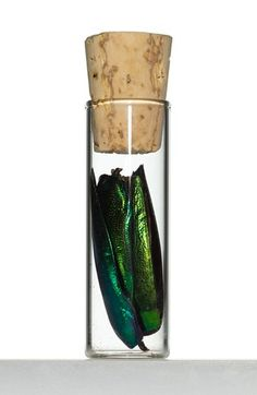 The Evolution Store Jewel Beetle Wing Covers in Vial available at #Nordstrom