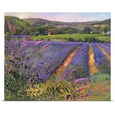 Canvas On Demand Buddleia and Lavender Field, Montclus, 1993 by Timothy Easton Painting Print on Canvas Framed Art Prints, Painting Prints, Canvas Prints, Big Canvas, Oil Paintings, Picture Frame Art, Flower Close Up, Watercolor On Wood, Lavender Fields