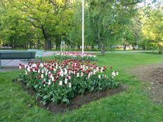 Arboretumin tulppaaniloistoa.