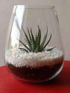 décoration d'intérieur avec plante dans terrarium