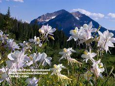 Rustler Gulch, Crested Butte Coloado, Rocky Mountain Photography