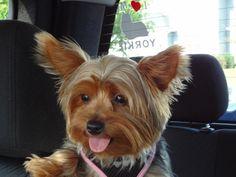 Gizmo out for a ride | Flickr: Intercambio de fotos