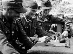 German soldiers play with a stray kitten. [World War II, c. 1943]