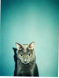 I found my kitty on the interwebs.