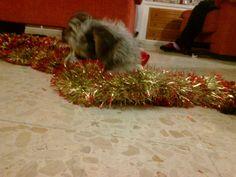 preparando el arbol de navidad