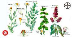 La naturaleza es sabia. Es más que un dicho popular. Algunas plantas ayudan a mejorar y aliviar los síntomas provocados por molestias gastrointestinales. ¿Sabrías nombrar algunas de ellas?   En nuestro blog te contamos qué plantas medicinales tienen mayor efecto sobre tu bienestar digestivo. ¡Descúbrelas