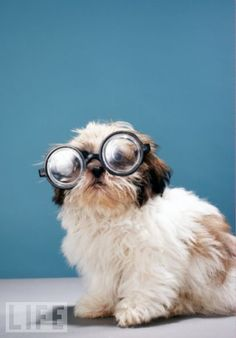 I love dogs! And glasses!