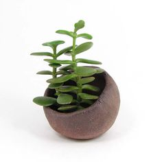 Brick Red Pinch Pot, Small Planter for Bonsai, Brown Kusamono or Succulent Planter with Slant Opening, 01-15-31