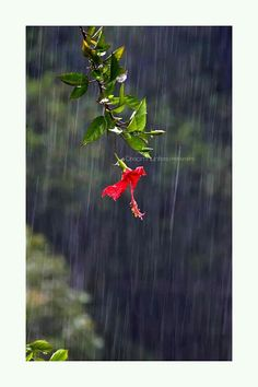 Dream Photography, Nature Photography, Smell Of Rain, Creative Photos, Amazing Places, Cool Places To Visit, The Good Place, Backgrounds, Collections