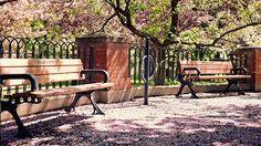Парки Весна Цветение - Обои Природа - 417.
