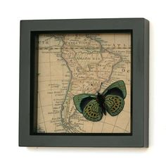 Charles Darwin Real Butterfly Natural History Map by BugUnderGlass. $46.00 USD, via Etsy.