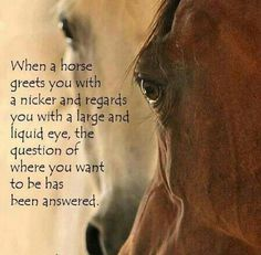 """Sometimes I think horses get a little too romanticized , when my horses nicker & look at me with """"those"""" eyes, they just want to know when they are getting fed. LOL"""