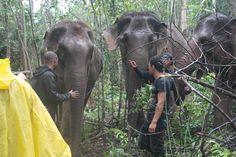 Karen Elephant Experience - Single Day