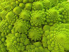 フラクタル図形をした野菜「ロマネスコ」の写真 - GIGAZINE