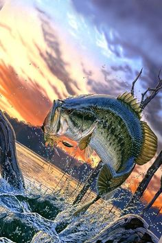 What Size of The Reel Is The BEST For Bass Fishing? Shimano Fishing Reels, Penn Fishing Reels, Bass Fishing, Daiwa Reels, Braided Line, Types Of Fish, Rod And Reel, Walk In The Woods, Open Water