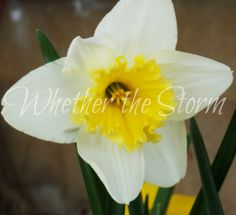 "Flower print ""Spring Has Sprung"" by WhetherTheStorm on Etsy"