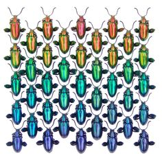 Stunning, natural metallics photographed by artist / enthomologist Christopher Marley Christopher Marley, A Bug's Life, Beautiful Bugs, Insect Art, Unusual Art, Tropical Pattern, Bugs And Insects, Art For Art Sake, Through The Looking Glass