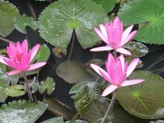 Lotus Hoi An Hotel features 65 comfortable rooms including 2 Suites, all with private balcony overlooking the beautiful gardens, swimming pool or surrounding countryside Vietnam Tours, Hoi An, Hotel Spa, Beautiful Gardens, Countryside, Lotus, Plants, Lotus Flower, Plant