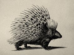 Black Porcupine Graphic Iron On Tote Bag by EverythingGraphic