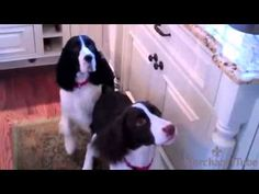 ▶ Two dogs' adorable feeding ritual - YouTube