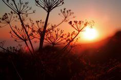 #scene #sunset #corsica