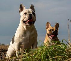 Kai Uwe und Jessie grüßen, French Bulldogs