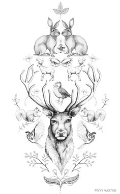 Animal Symmetry Symphony #2 by Linn Warme